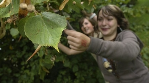 go to /resources/fieldwork/fieldworkideasandresources/