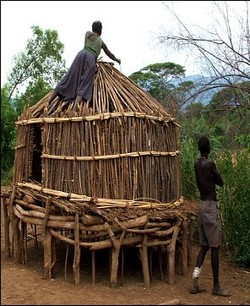 A Pokot family building a new maize store. This, like so many of the tasks in Pokot society, is women's work.