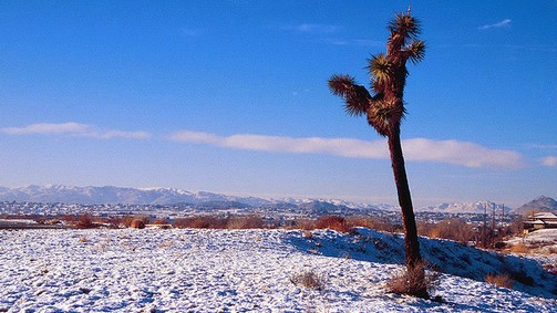 snow in the desert