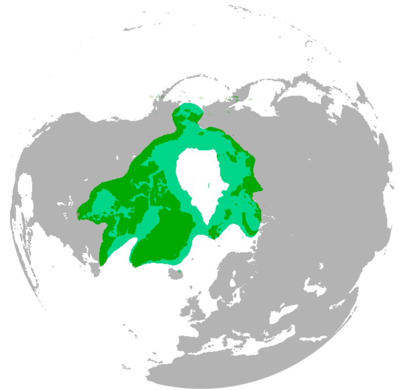 Distribution of Polar Bears