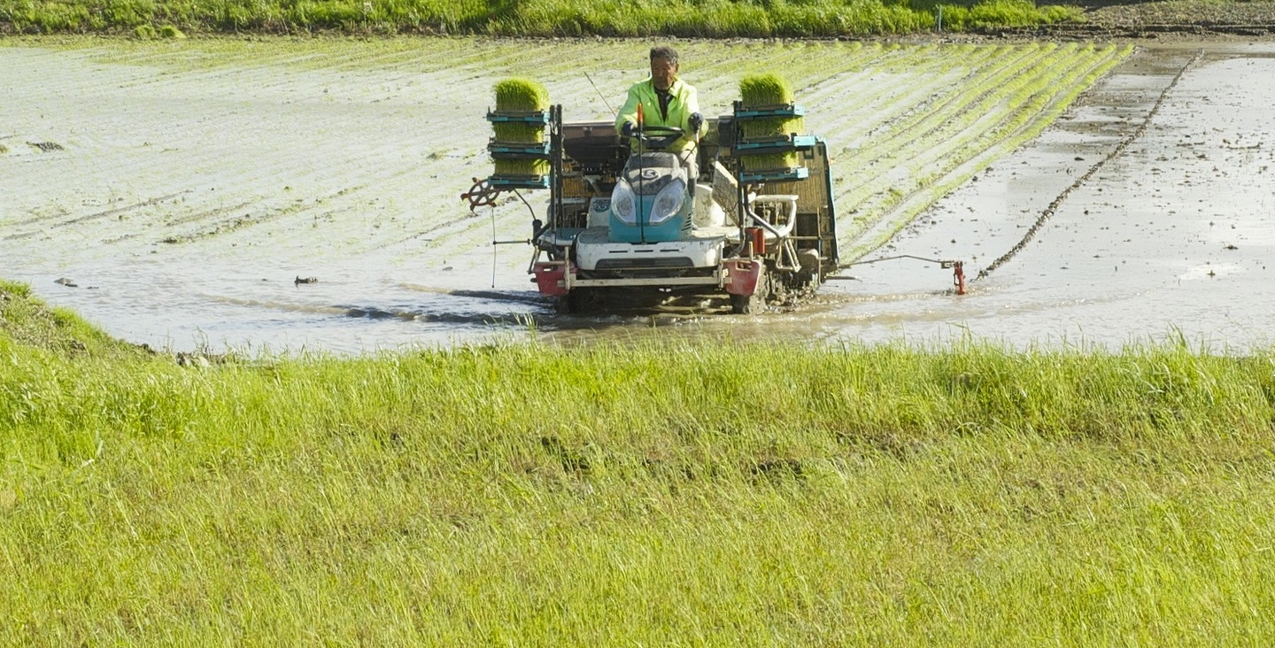 Bangladesh Floods - Ibrahim Khalil taking up rice seedlings for replanting elsewhere.